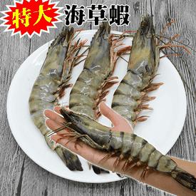 特大鮮甜肥美海草蝦